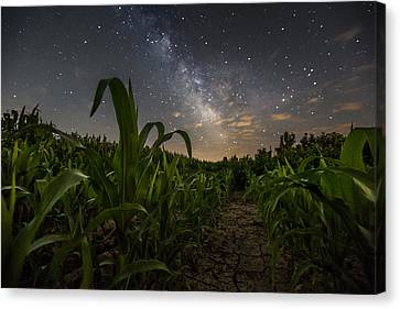 Cornfield Canvas Print - Iowa Corn by Aaron J Groen