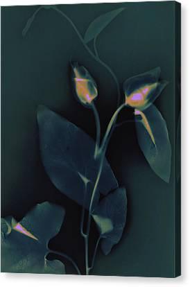 Ipomena Canvas Print by Susan Leake