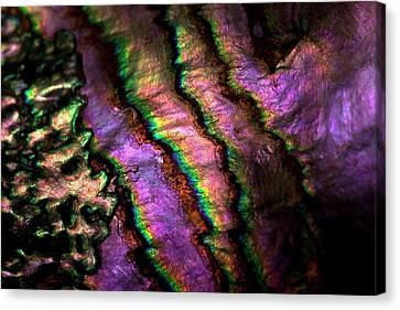 Iridescent Nacre Abalone Shell Colour 2 Canvas Print