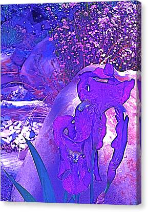 Canvas Print featuring the photograph Iris 2 by Pamela Cooper