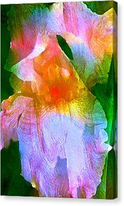 Iris 53 Canvas Print by Pamela Cooper