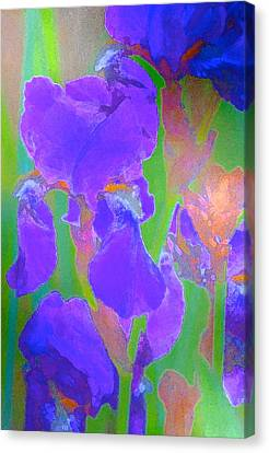 Iris 59 Canvas Print by Pamela Cooper