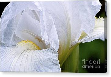 Iris Abstract Canvas Print by Ron Roberts