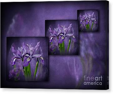 Iris Art Canvas Print