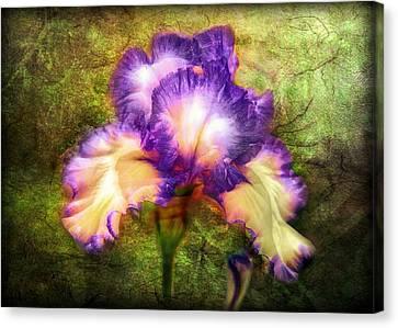Iris Beauty Canvas Print by Lilia D