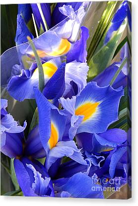 Iris Blues In New Orleans Louisiana Canvas Print by Michael Hoard
