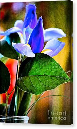 Iris Carried Away Canvas Print by Gwyn Newcombe