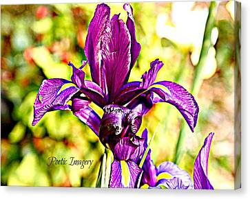 Iris Canvas Print by Debbie Sikes