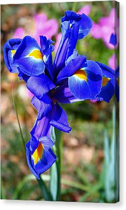 Canvas Print featuring the photograph Iris by Denise Moore