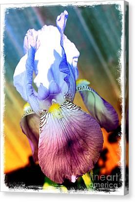 Digital Touch Canvas Print - Iris Drama by Carol Groenen