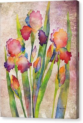 Iris Elegance On Pink Canvas Print by Hailey E Herrera