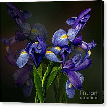 Canvas Print featuring the photograph Iris Fantasy by Shirley Mangini