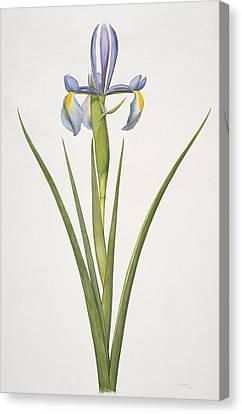 Iris Flower, 20th Century Canvas Print