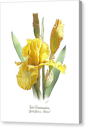 Iris Germanica Gold Galore Canvas Print by Artellus Artworks