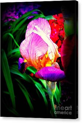 Iris Glow Canvas Print by Janine Riley