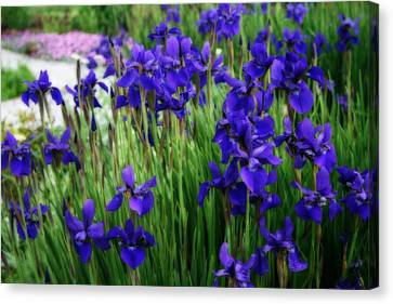 Canvas Print featuring the photograph Iris In The Field by Kay Novy