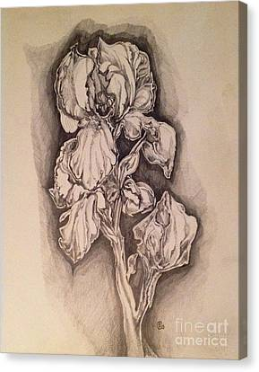Iris Canvas Print by Iya Carson