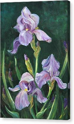 Iris Canvas Print by Jolyn Kuhn