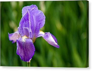 Canvas Print featuring the photograph Iris by Lana Trussell