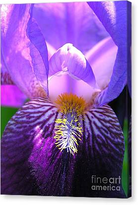 Canvas Print featuring the photograph Iris Light by Susan  Dimitrakopoulos