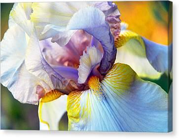 Iris Canvas Print by Linda Segerson