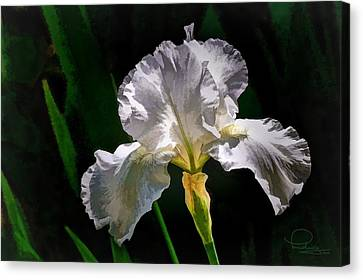 Iris Canvas Print by Ludwig Keck