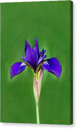 Iris Canvas Print by Marion Johnson