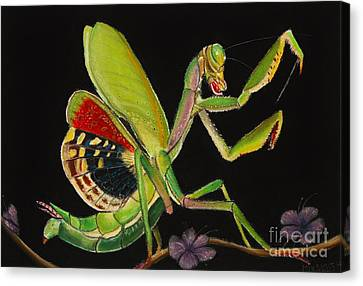 Iris Oratoria Canvas Print by Mik Smith
