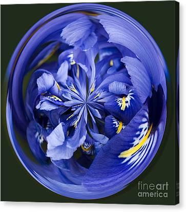 Iris Orb Canvas Print by Anne Gilbert