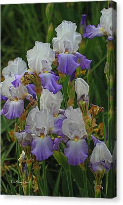 Iris Patch At The Arboretum Canvas Print by Tom Janca