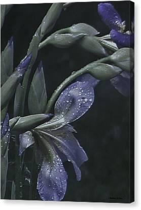 Iris Rain Canvas Print by Barbara St Jean