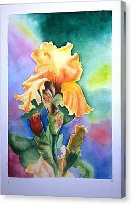 Iris Sold Canvas Print
