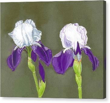 Iris Canvas Print by Ruth Seal