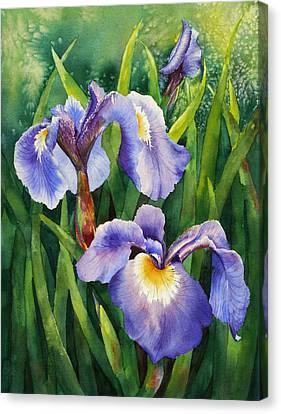 Iris Setosa Alaska Canvas Print by Karen Mattson