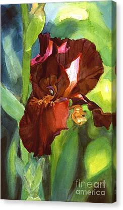 Watercolor Of A Tall Bearded Iris In Sienna Red Canvas Print