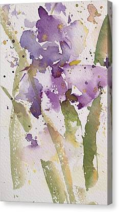 Iris Study #3 Canvas Print by Robin Miller-Bookhout