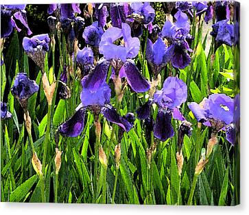 Canvas Print featuring the photograph Iris Tectorum by Yue Wang