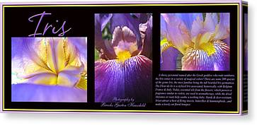 Iris Threesome Canvas Print by Brooks Garten Hauschild