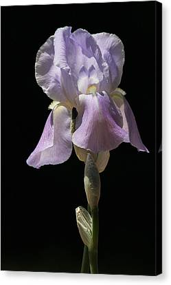 Iris Canvas Print by Trina  Ansel