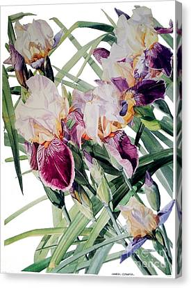 Watercolor Of Tall Bearded Irises I Call Iris Vivaldi Spring Canvas Print