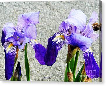 Canvas Print featuring the photograph Irises by Jasna Dragun