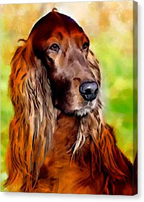 Irish Setter Canvas Print by Char Swift