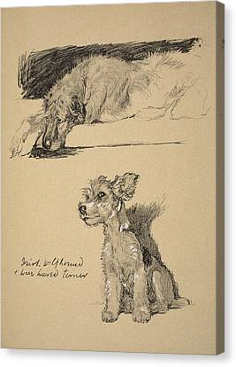 Irish Wolfhound And Wire Haired Terrier Canvas Print by Cecil Charles Windsor Aldin