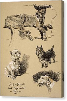 Irish Wolfhound, West Highlander Canvas Print
