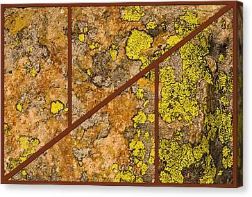 Iron And Lichen Canvas Print
