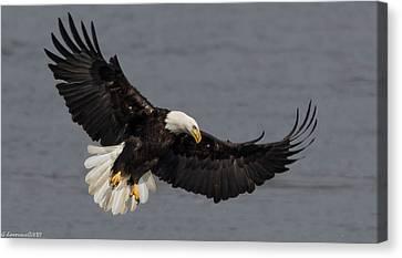 Iron Eagle  Canvas Print by Glenn Lawrence
