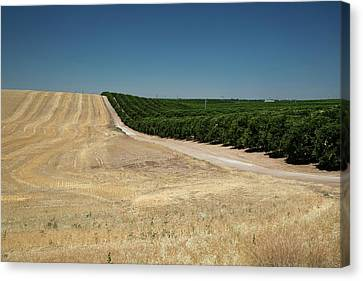 Irrigated Orchard Canvas Print by Jim West