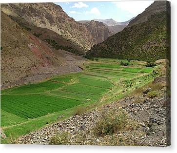 Irrigated Valley In Morocco Canvas Print