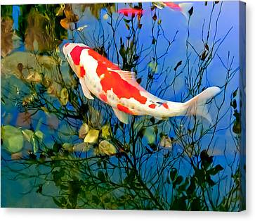 Koi Canvas Print by Wayne King