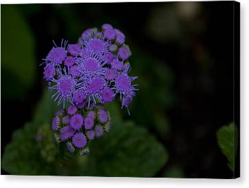 Canvas Print featuring the photograph Is That Purple by Greg Graham